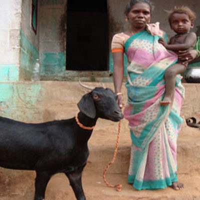 SAWED Goat Rearing Project