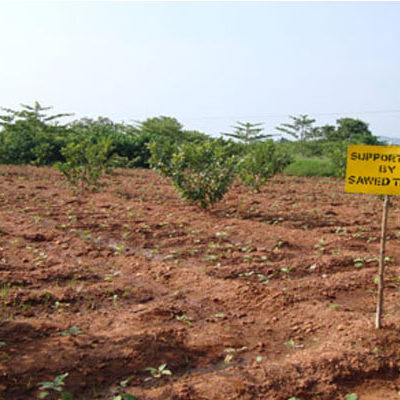 Agro-Forestry/Orchard Development