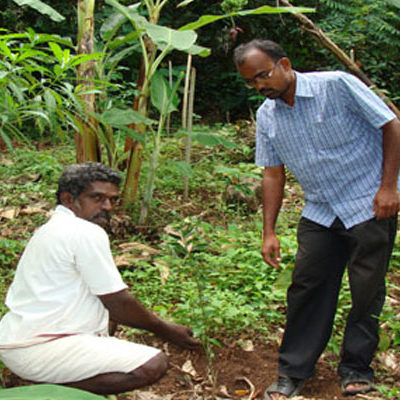 Tree Planting in Lower Palani Hills