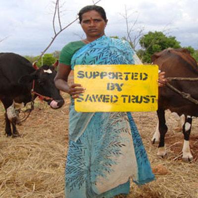 SAWED Dairy Development Project