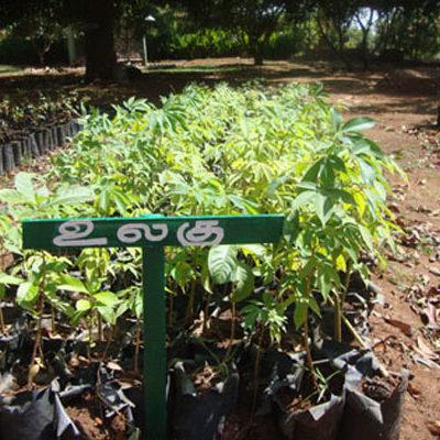 SAWED Forest Seedlings Nursery